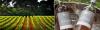 Tasting of 4 wines - Château de Serres Vineyard & Winery
